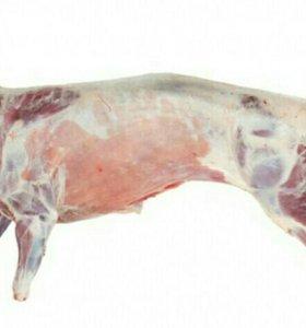 Мясо молодой ярочки