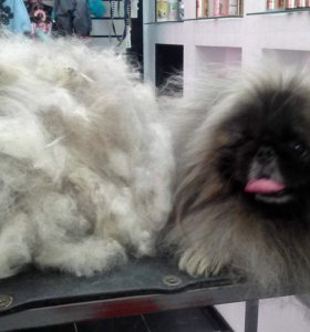 Вычёсывание собак линяющих пород с выездом