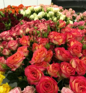 Роза 150 см цветы доставка