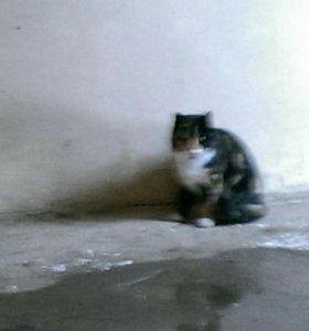 Кошка, молоденькая, годик