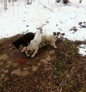 Щенки от охранных собак предприятия