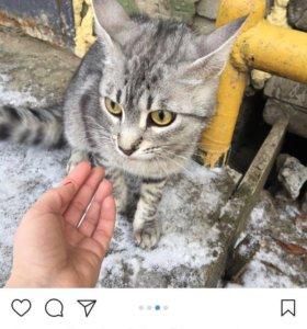Кошка в добрые рук