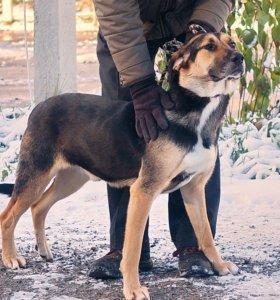 Молодой пёс в дар