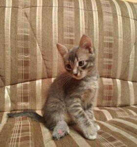 Котята, в хорошие руки)