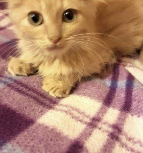 Котёнок Персик.