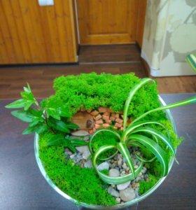 Флорариумы, мини-садики