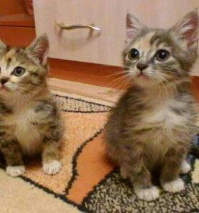 Котята, 3 месяца