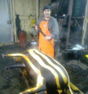 Мясо свинины обработанное дедовским  способом.