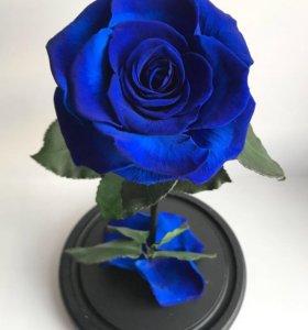 Живая роза в колбе (стоит от 5-10 лет)