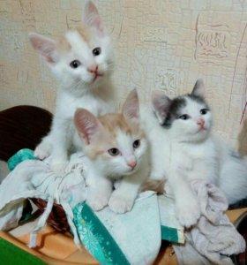 3 котёнка