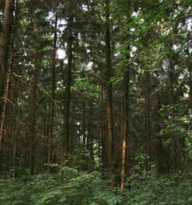 Срочно Продам выписку на 500 кубов леса