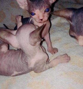 Продам милых котят!