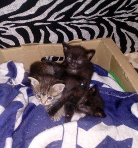 Отдам Трёх прекрасных котят