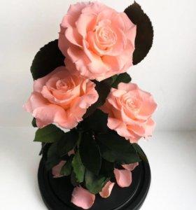 Розы в колбе (живые стоят от 5 лет)