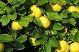 Черенки растений для выращивания саженцев на окне