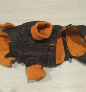 Одежда для собак мелкой породы