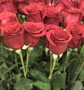 Свежие Розы 60см