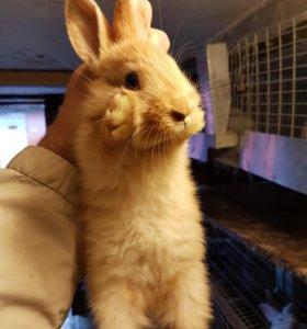 Кролики Бургундия мясные