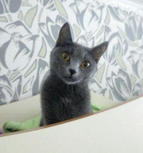 Кошку отдам