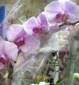 """Цветы - """"Орхидеи"""""""