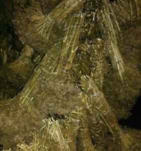 Веники из укропа сушеные