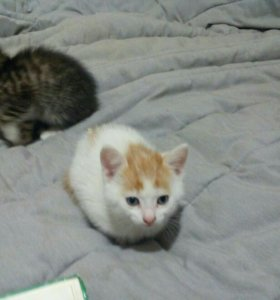 Котёнка 3