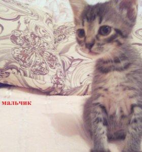 отдам котят в добрые руки)