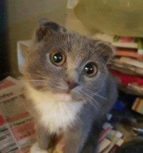 Котеняшки - вислоушки