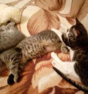 Котятки в добрые руки)))