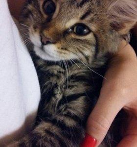 Котята в поисках семьи
