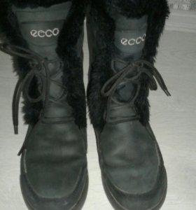 Сапоги ECCO женские, зимние