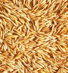 Зерно для сх животных
