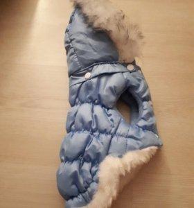 Одежда для маленькой собачки.