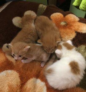 Отдам котят , 3 мальчика 1 девочка