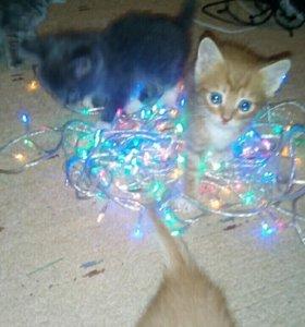 Котята 1 мальчик 1 девочка.