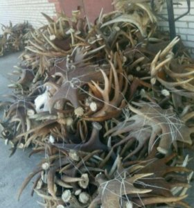 Скупаю рага Олень лось сайгака