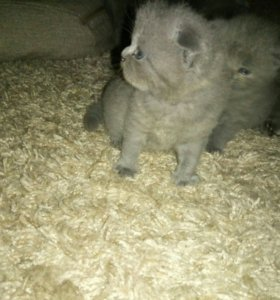 Плюшевые котята!!!