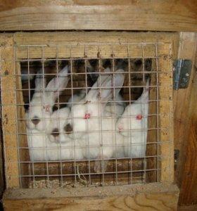 тушки кролика