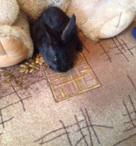 Кролики 3 месяца