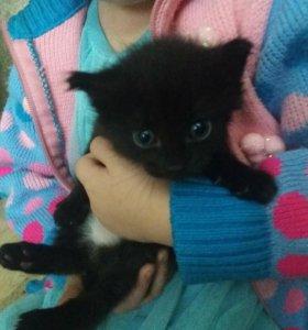 Котенок(мальчик)