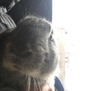 Тушки кроликов 1000 р за штуку!