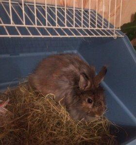 Кролик Жорик
