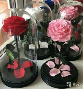 Роза в колбе Элитная