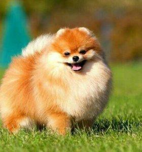 Погуляю с вашей собакой,кимры