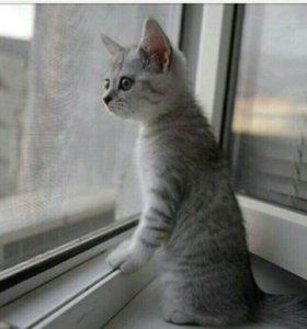 Окна и балконные группы (ПВХ)!!!