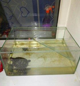 Аквариум и черепахи