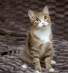 Мега крутой кот Финли