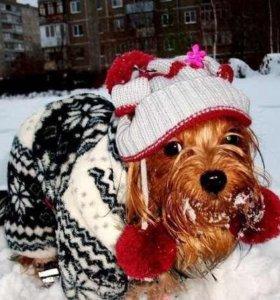 Шапочка и шарфик на собаку