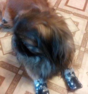 Ботинки на собаку