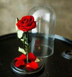 Роза в колбе, вечная роза.